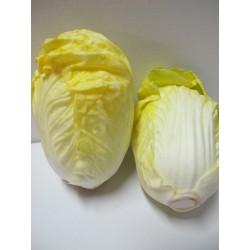 สือการเรียนการสอนผักผลไม้(ผักกาดขาว) 2060-13