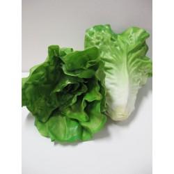 สือการเรียนการสอนผักผลไม้(ผักกาดหอม) 2060-14